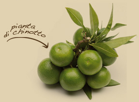 chinotto_03